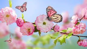 flowers-butterflies